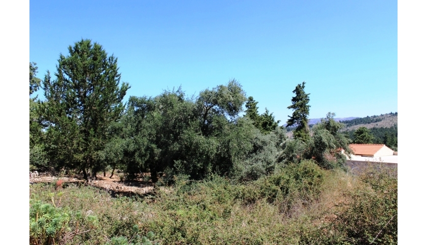 DCP-229 2 Plots in Sellia - Just €30,000