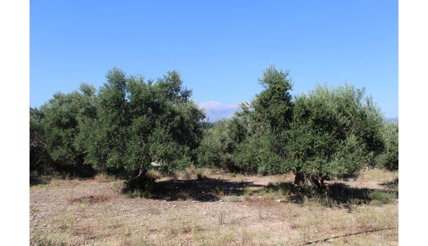 DCP-233 - Gavalohori Village Plot — Mountain views - €105,000