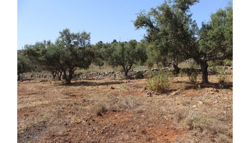 DCP-235 - Sea views in Paleloni - €110,000