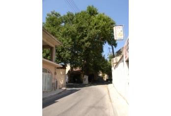 Armeni